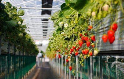 Silver Kuus: 5G toob põllumajanduses digirevolutsiooni